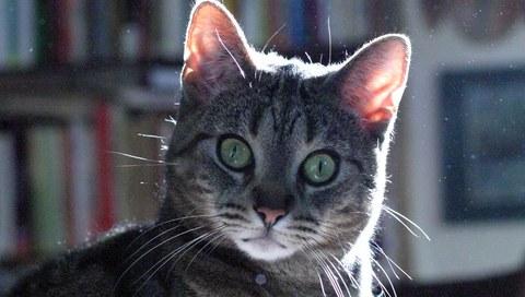 удивленная кошка фото